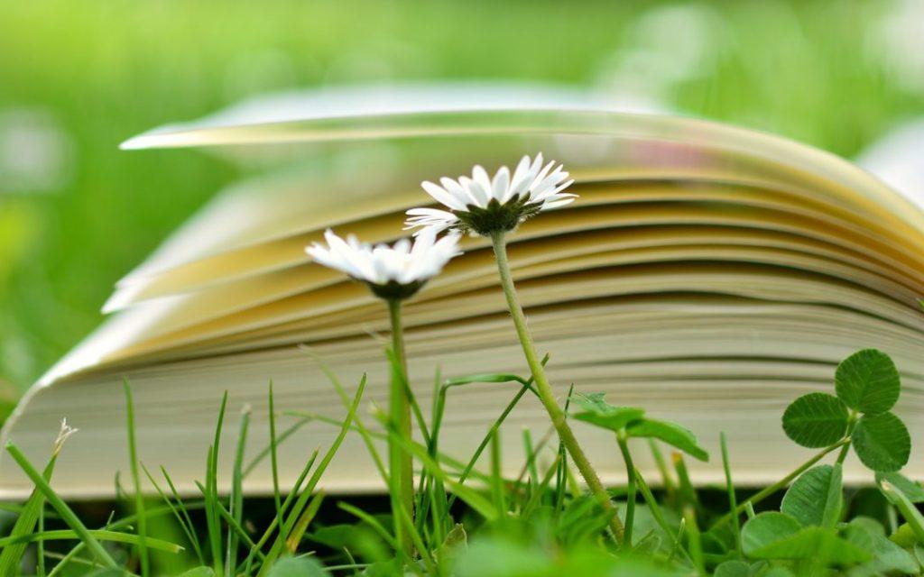 book-2304389_1920-1080x675
